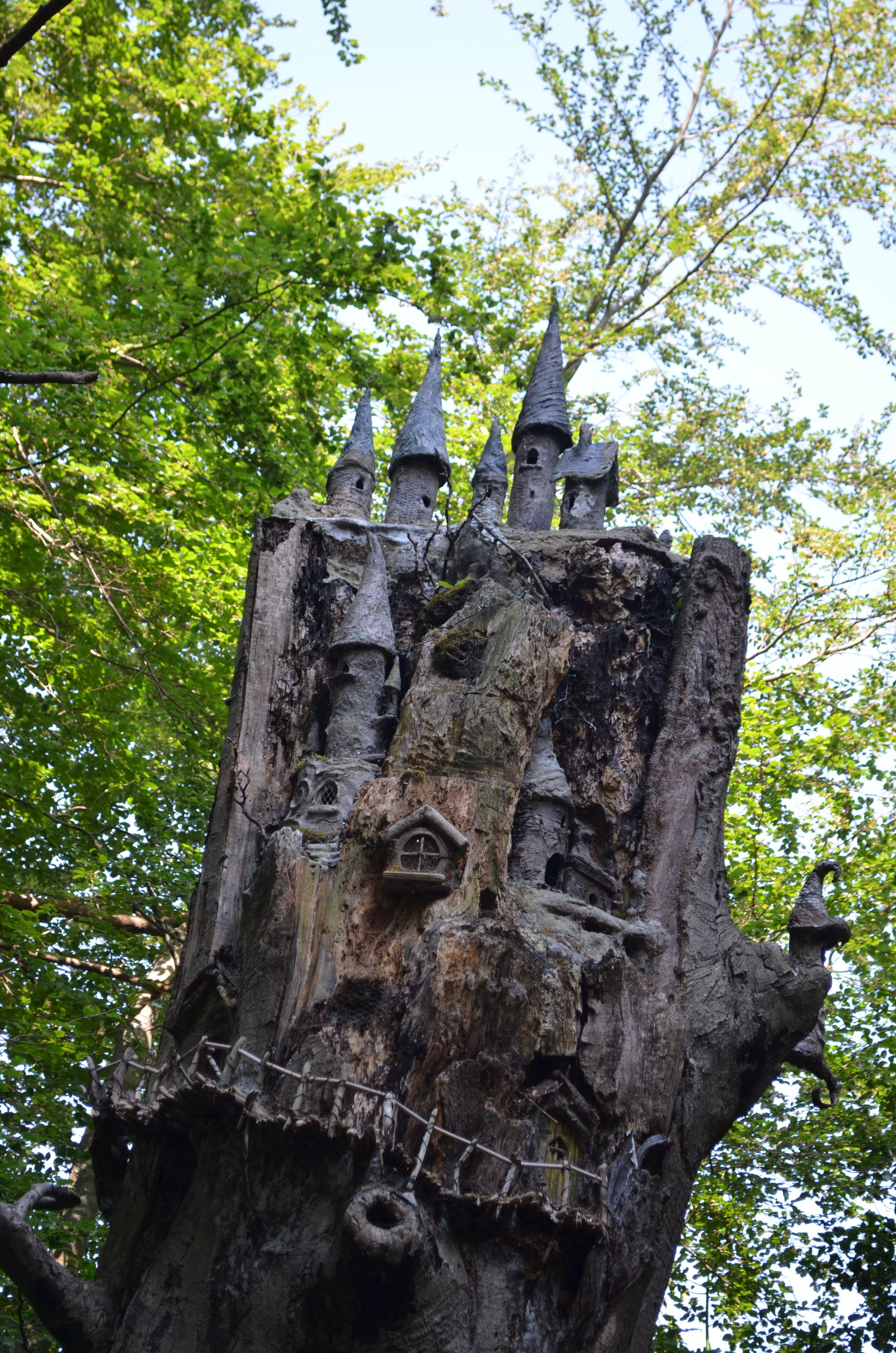 Tree stump fairy house - Dsc_0039