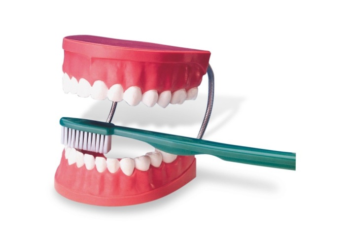img_img_TH01_tooth_brushing_model