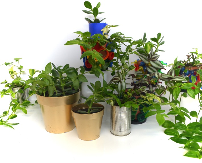 Introducing Indoor Houseplants and Innovative Plant Pots   EVE ESTUARY